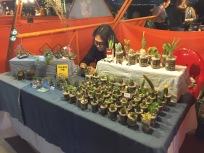 Miniature plants! But cannot bring back to SG.